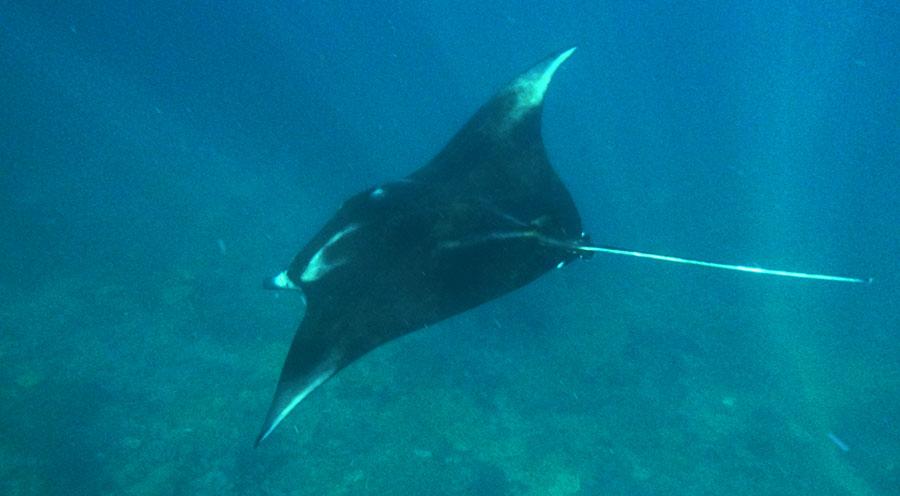 Sensations Voyage à Nusa, snorkeling avec les raies manta - Bali