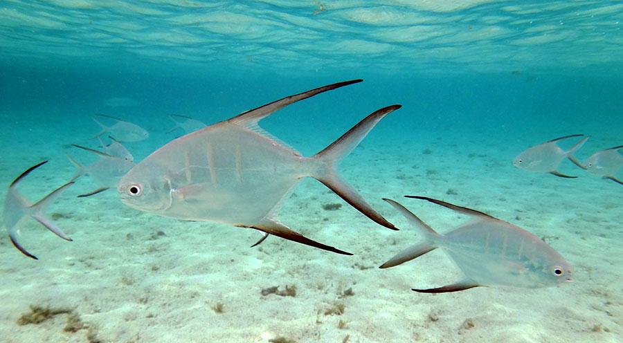 sensations-voyage-destination-guadeloupe-grande-terre-snorkeling-poisson