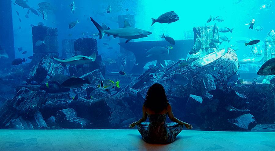 sensations-voyage-dubai-aquaventure-atlantis-lost-chamber2