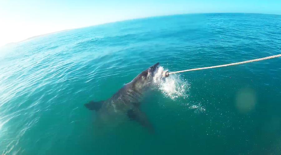 sensationsvoyage-afriquedusud-plongee-requin-requin-blanc