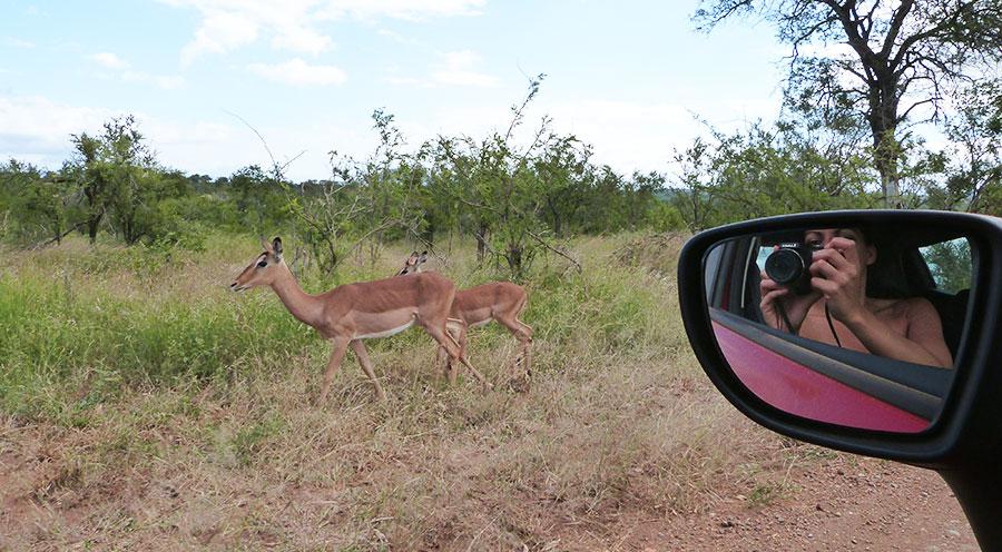 sensationsvoyage-bonsplans-safari-afrique-du-sud