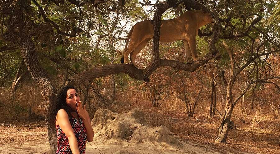 Sensations Voyage Marche avec les lions senegal sénégal expériences à Fathala