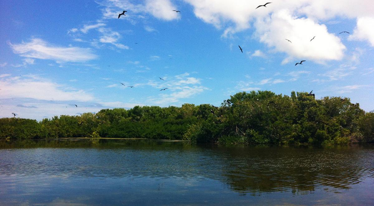 sensations-voyage-voyages-photos-antigua-barbuda-mangrove
