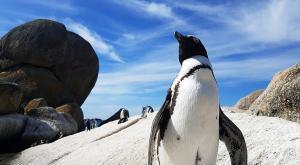 sensations-voyage-afriquedusud-buldersbeach-pingouin