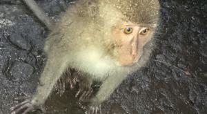 sensations-voyage-bali-ubud-monkey-forest2