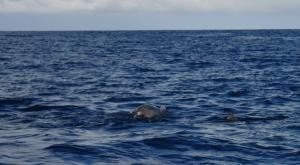 sensations-voyage-destination-guadeloupe-dauphin