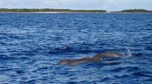 sensations-voyage-destination-guadeloupe-dauphins