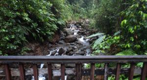 sensations-voyage-destination-guadeloupe-nature-rando-basse-terre