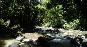 sensations-voyage-destination-guadeloupe-rando-basse-terre-nature