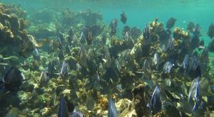 sensations-voyage-destination-guadeloupe-snorkeling-petite-terre-poissons