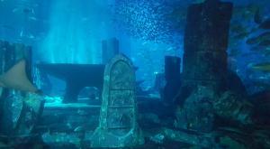 sensations-voyage-dubai-atlantis-aquarium-2