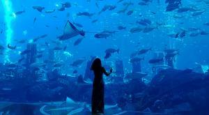 sensations-voyage-dubai-atlantis-lost-chamber-aquarium