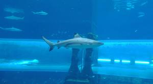 sensations-voyage-dubai-atlantis-shark