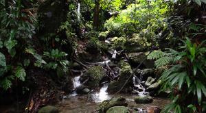 sensations-voyage-voyage-photos-la-dominique-ile-nature-ruisseau