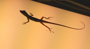 sensations-voyage-voyages-martinique-lezard-lights