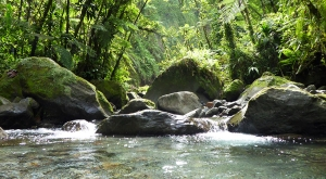 sensations-voyage-voyages-martinique-photos-martinique-gorges-falaise-canyoning-riviere-2