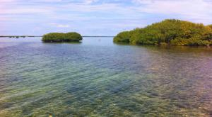 sensations-voyage-voyages-photos-antigua-barbuda-mangrove-2