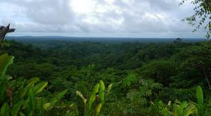 sensations-voyage-voyages-photos-guyane-foret