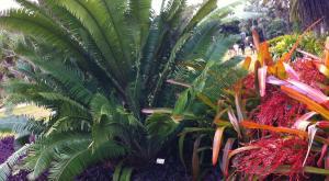 sensations-voyage-voyages-photos-miami-jardin-botanique
