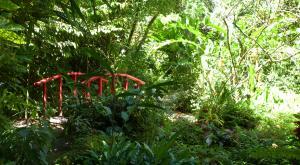 sensations-voyage-voyages-sainte-lucie-jardin-botanique
