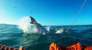sensationsvoyage-afriquedusud-plongee-requin-requin-blanc-4