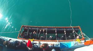 sensationsvoyage-afriquedusud-plongee-requin-requin-blanc-8