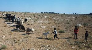 sensationsvoyage-sensations-voyage-jordanie-jordan-photos-bedouin-life