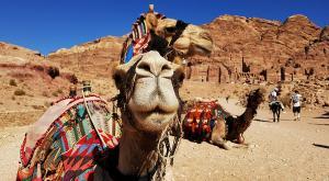 sensationsvoyage-sensations-voyage-jordanie-jordan-photos-petra-dromadaire-camel-2