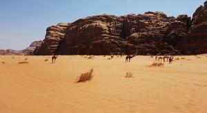 sensationsvoyage-sensations-voyage-jordanie-jordan-photos-wadi-rum-desert-camel-chameau