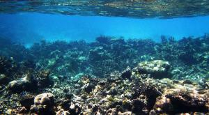 sensationsvoyage-voyage-sri-lanka-maldives-snorkeling-plongee-1
