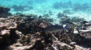 sensationsvoyage-voyage-sri-lanka-maldives-snorkeling-plongee-2