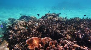 sensationsvoyage-voyage-sri-lanka-maldives-snorkeling-plongee-4