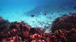 sensationsvoyage-voyage-sri-lanka-maldives-snorkeling-plongee-addu-atoll-2