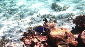 sensationsvoyage-voyage-sri-lanka-maldives-snorkeling-plongee-addu-atoll