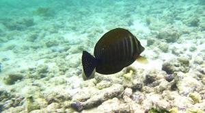 sensationsvoyage-voyage-sri-lanka-maldives-snorkeling-plongee-fish-2