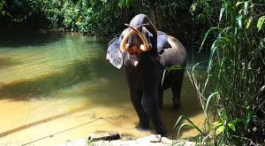 sensationsvoyage-voyage-sri-lanka-photo-millenium-elephant-dilawenna-2
