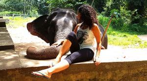sensationsvoyage-voyage-sri-lanka-photo-millenium-elephant-dilawenna-4