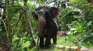 sensationsvoyage-voyage-sri-lanka-photo-millenium-elephant-dilawenna-6