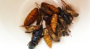 sensationsvoyage-voyage-thailande-chiang-mai-insectes