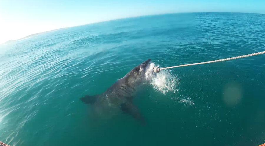 sensations-voyage-afrique-du-sud-requin