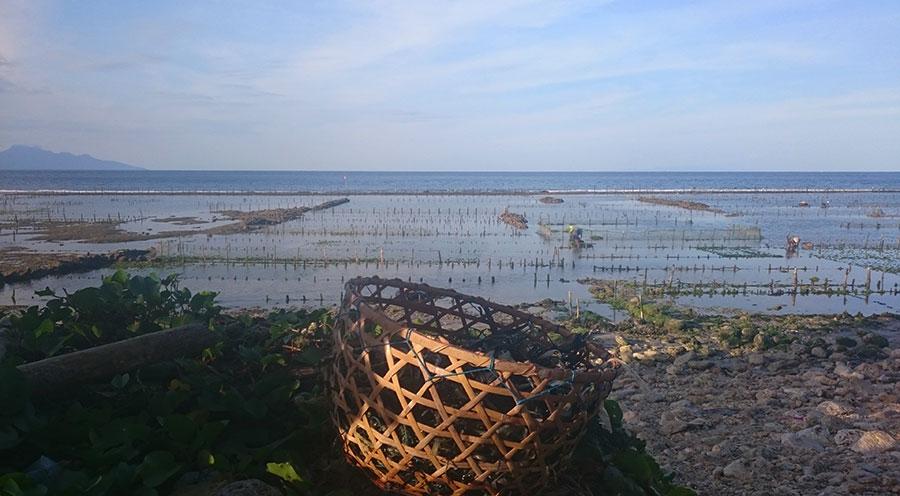 Sensations Voyage à Bali, les cultures d'algues de Nusa Penida