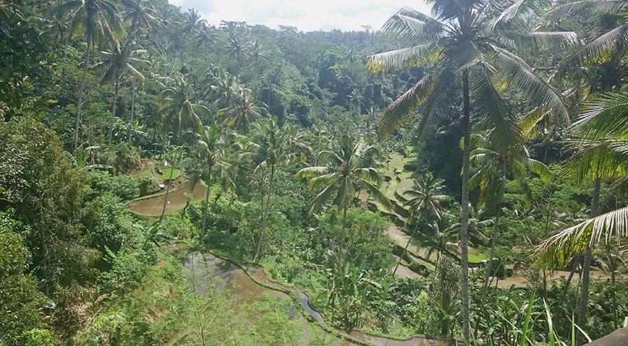 Sensations Voyage à Bali, Indonésie, vue sur les rizières d'Ubud