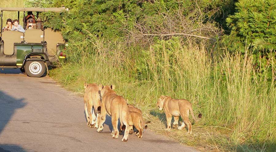 sensations-voyage-afriquedusud-safari-kruger-ranger