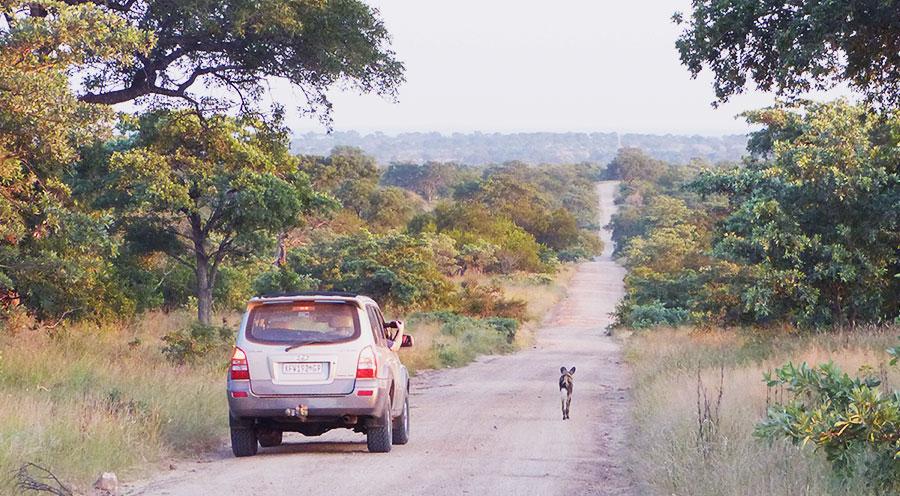 sensations-voyage-afriquedusud-safari-kruger-seul