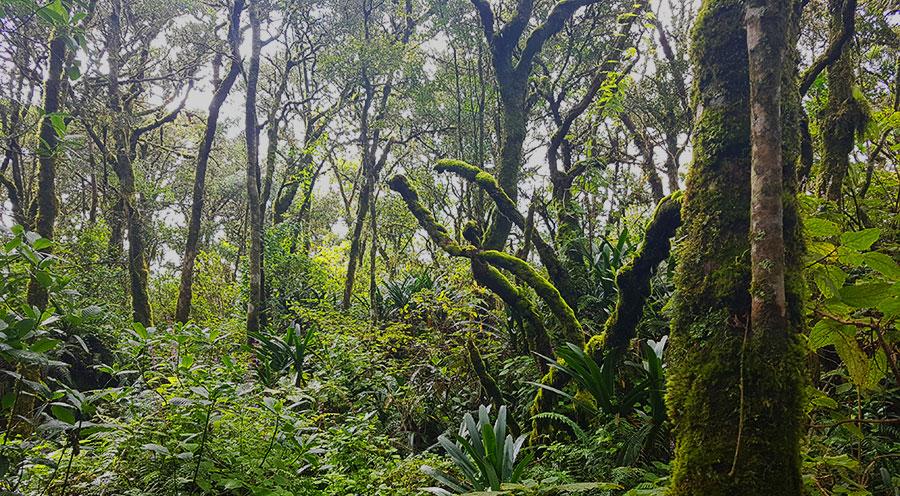 sensations-voyage-afriquedusud-rain-forest