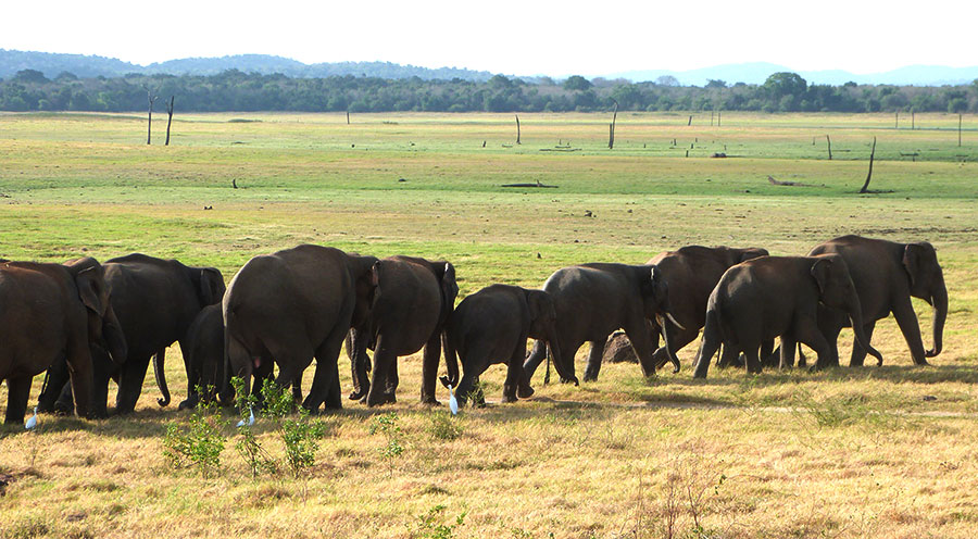 sensationsvoyage-voyage-sri-lanka-kaudulla-elephants-rassemblement-family-2