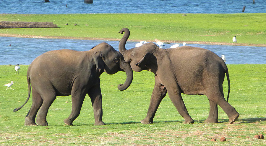 sensationsvoyage-voyage-sri-lanka-kaudulla-elephants-rassemblement-kids