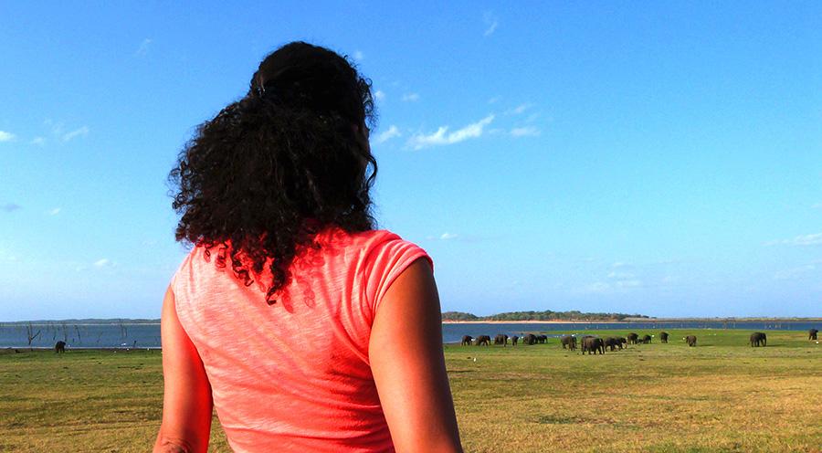sensations voyage incontournables sri lanka que faire que voir kaudulla-rassemblement-elephants-2