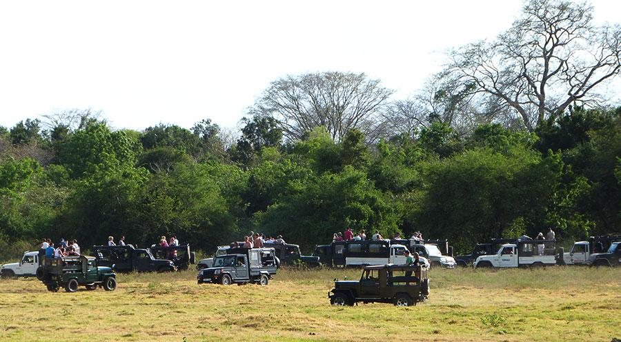 sensationsvoyage-voyage-sri-lanka-kaudulla-safari-jeep