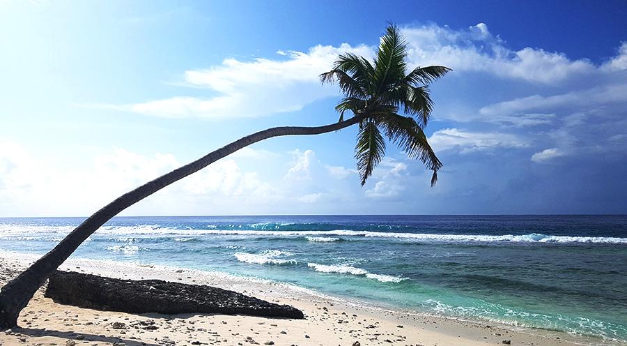 sensationsvoyage-voyage-sri-lanka-maldives-beach-plage-palmtree